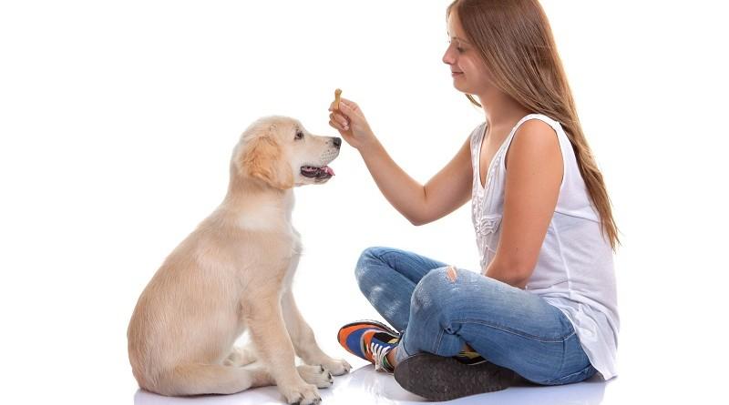 Vijf tips om je puppy goede manieren te leren