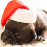 Tips om je hond mee te laten doen met de feestdagen
