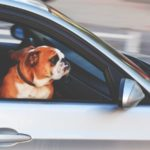 Tips voor het maken van een roadtrip met huisdieren