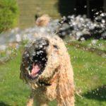 Zo houdt je huisdieren veilig en gezond tijdens de zomerdagen