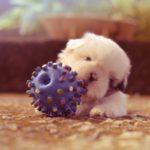 Vijf essentiële tips voor nieuwe puppy's