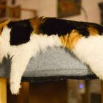 Hot Spot: kattencafé The Coffee Cat